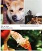 OnePlus 8 Pro-11